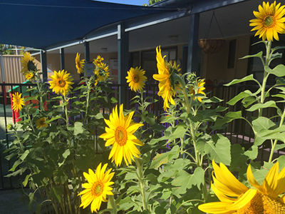 Robina Childcare garden project